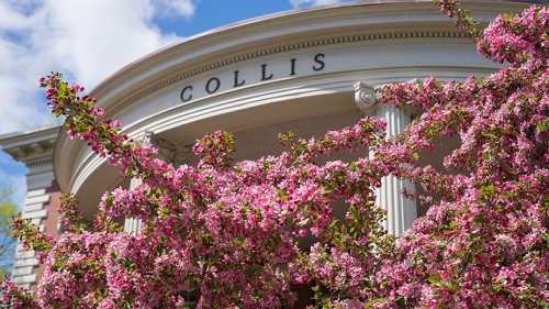 a tree with pink flowers blooming in front of the columns of the Collis Center