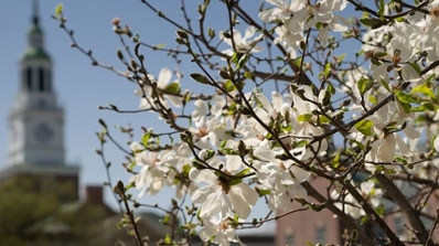 A tree blooming in front of Baker Tower.